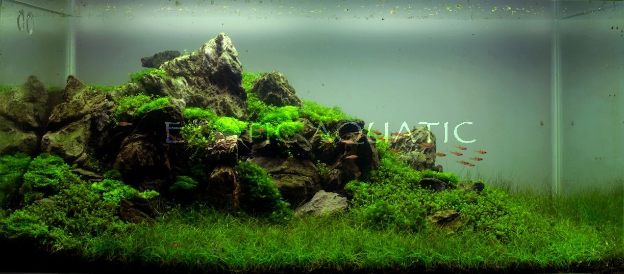 This Aquascape Is A Representation Of A Mountain Range Tank Is 3ft