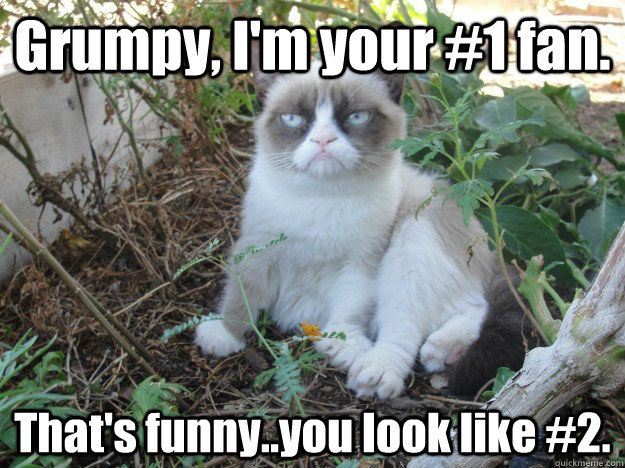 tard the grumpy cat archive