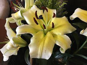 Açucena - A flor da altivez e elegância | Flores, Jardim