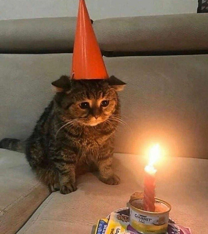 Happy birthday. in 2020 Cat birthday, Funny cat memes