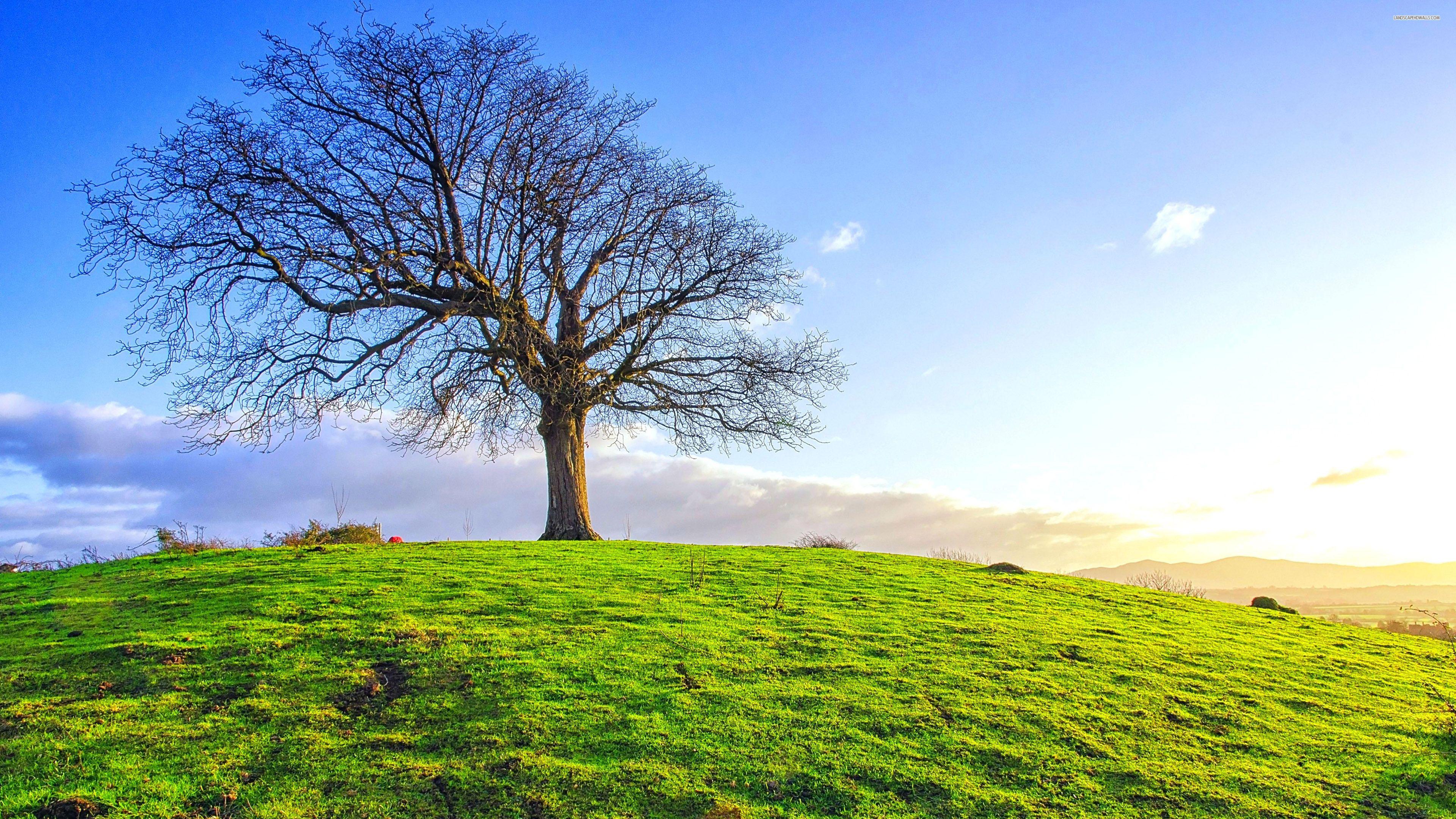 05 24 2016 Scripture Field Wallpaper Bare Tree Nature