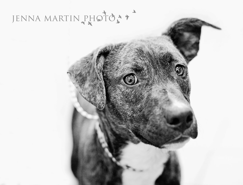 Argo Dog Dogs Puppy Puppies Pet Photography Animal Shelter Grey Hound Dog Labrador Retriever Street Dogs