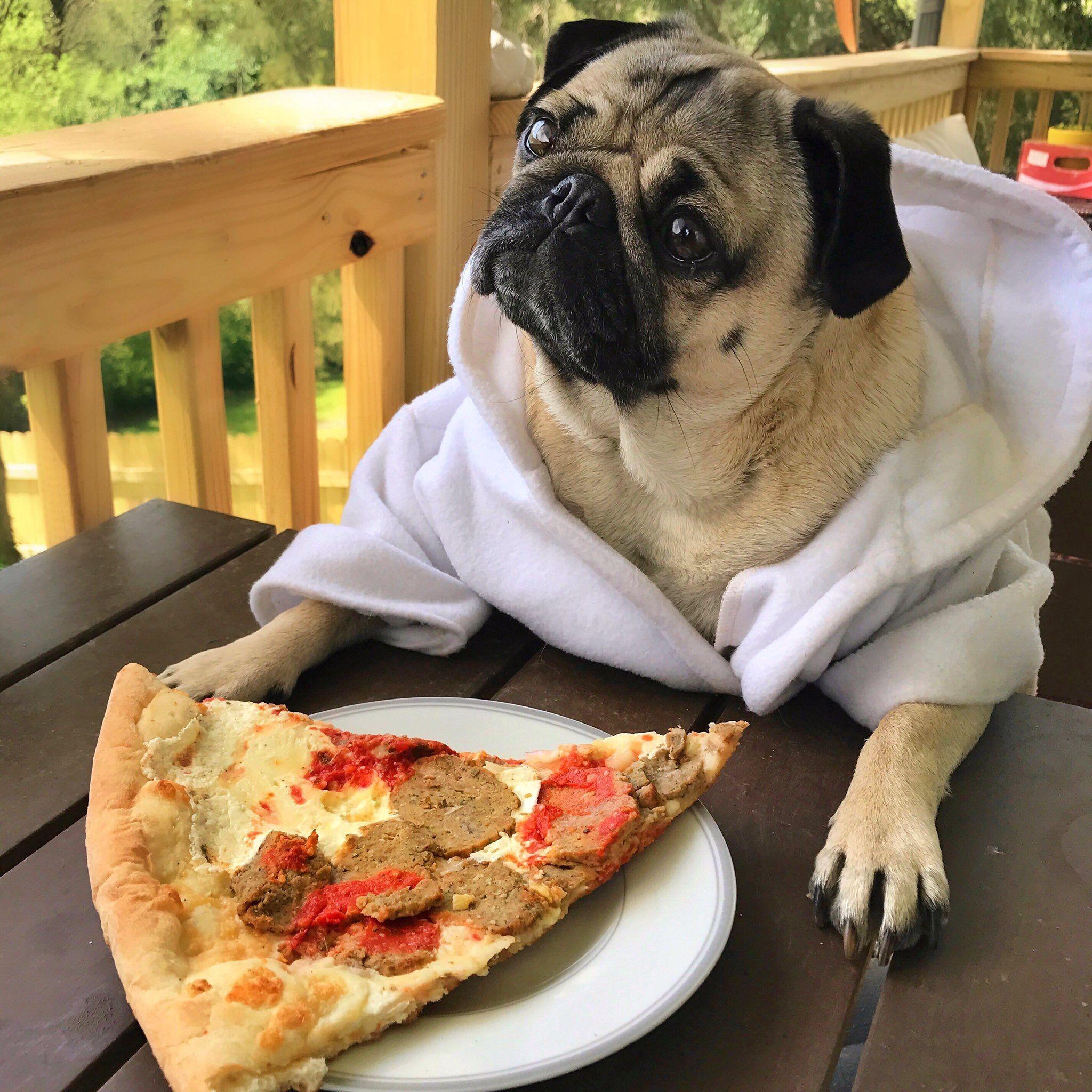 Днем рождения, прикольные картинки с пиццей
