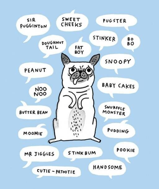 Pug Dog Nicknames Chart Cute Cute Pugs Pugs Pug Cartoon