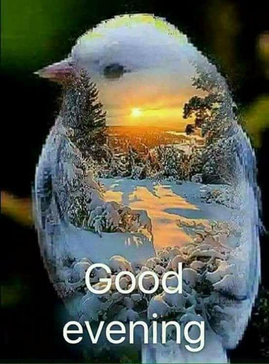 Good Evening Bird G M Good Evening Greetings Good Morning Good