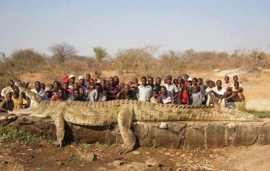 21 Ft Long Nile Crocodile Hunted After It Reigned Terror Over A