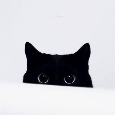 resultado de imagem para gatos preto tumblr animais fofos cats