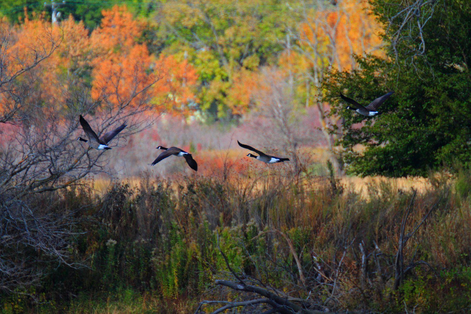 Desoto Bend National Wildlife Refuge Ia National Wildlife