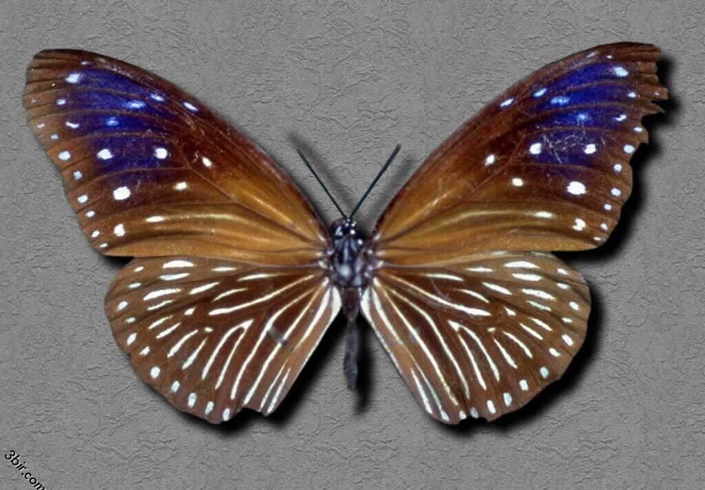 صور فراشات طبيعية رائعه جدا منتديات عبير Arabic Love Quotes Insects Animals