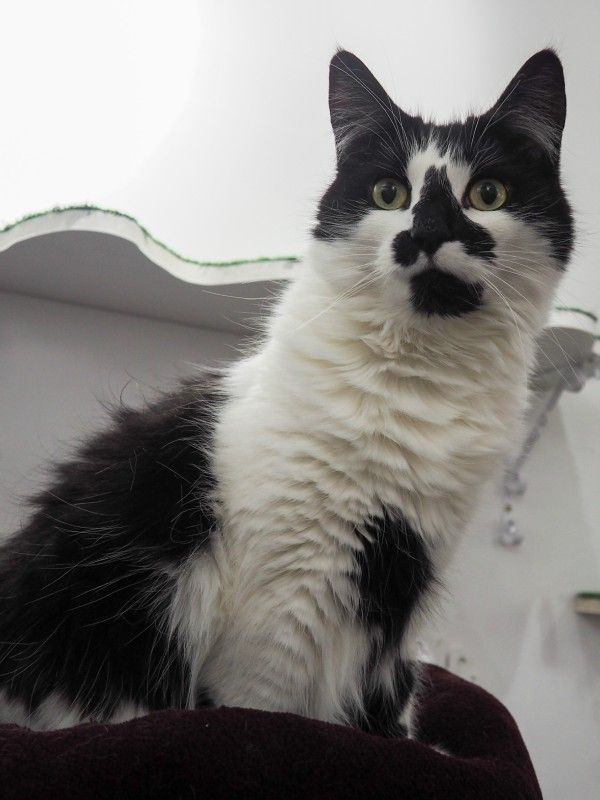Cats from London {England} Cats, Cat lovers, Feline