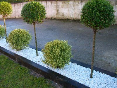 Piedra blanca seto rbol jardin pinterest gardens for Piedra blanca para jardin precio