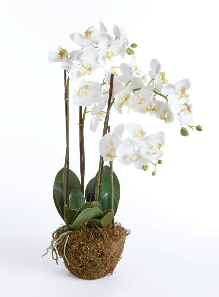 Phalaenopsis Drop In   Napa Home And Garden | Domino.com