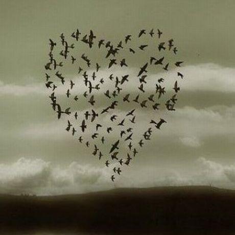 Love+++Birds.jpg (460×460)