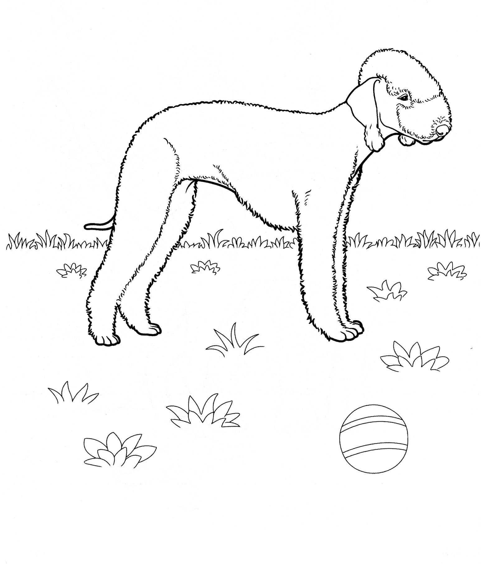 dog_coloring_pages_32 Teenagers coloring pages   favorite ...