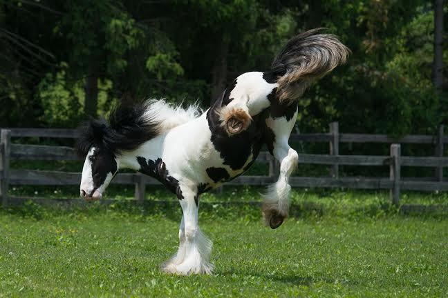#horses    Just for kicks
