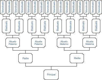 Hacer Arbol Genealogico Para Imprimir Buscar Con Google Como Hacer Arbol Genealogico Dibujo De Arbol Plantillas De Arbol Genealogico