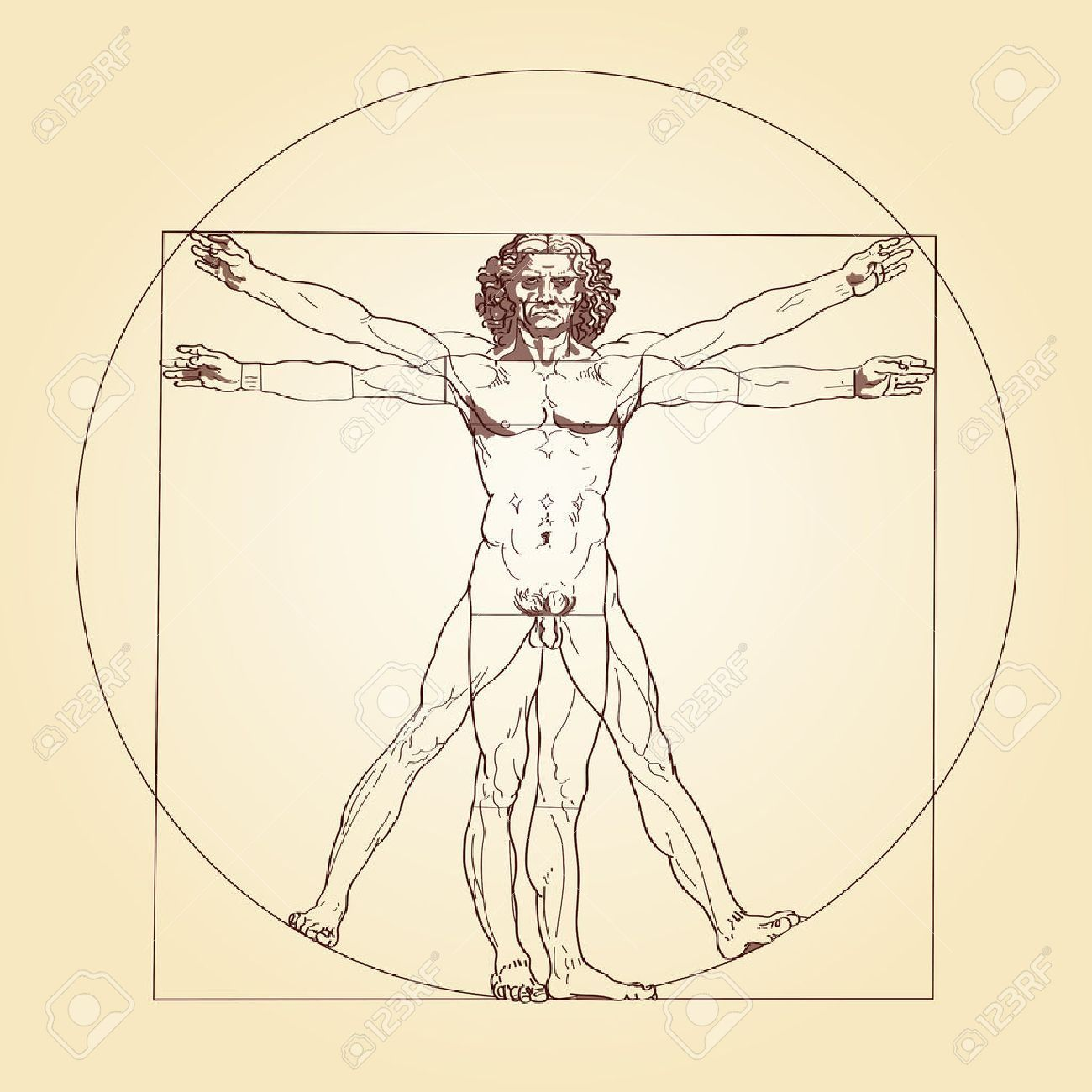 Image result for human proportions