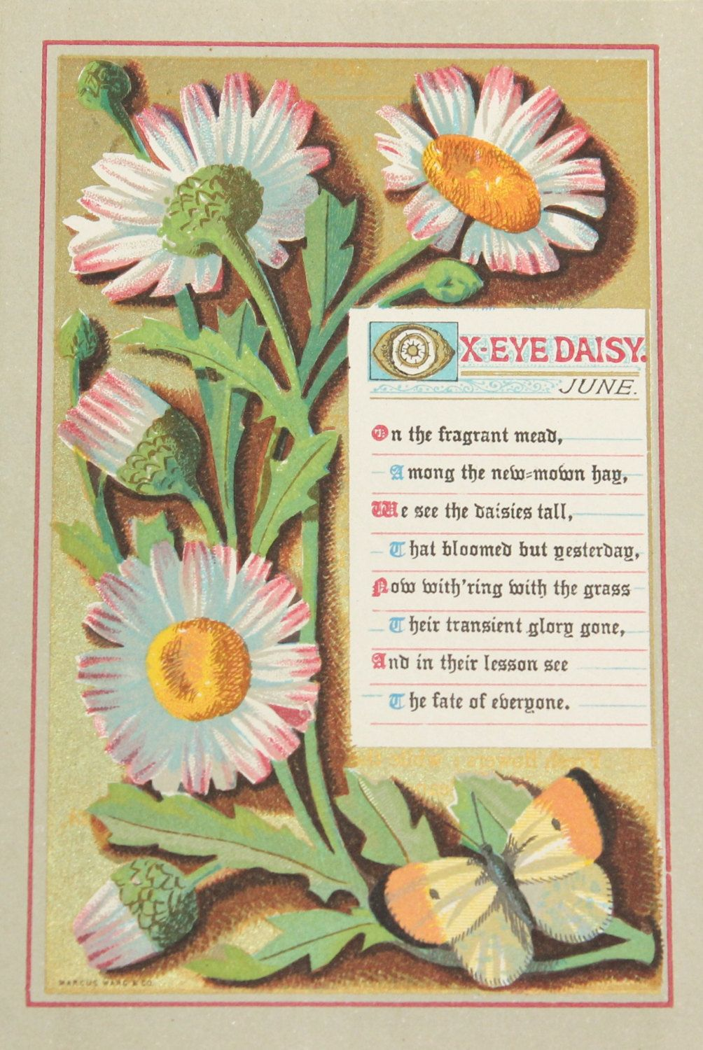 1873 genuine antique ox eye daisy june plate vintage original 1873 genuine antique ox eye daisy june plate vintage original victorian print seasons months wild flowers botanical botany by vintageprintageart on etsy izmirmasajfo Images