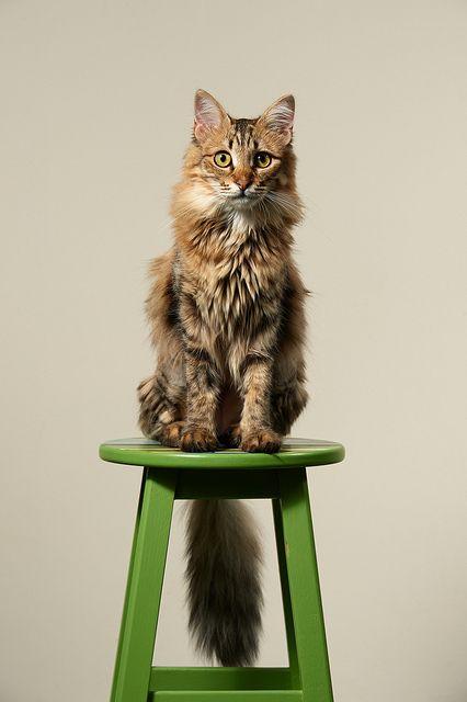 bonito gatito