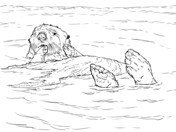 sea otter floating coloring page