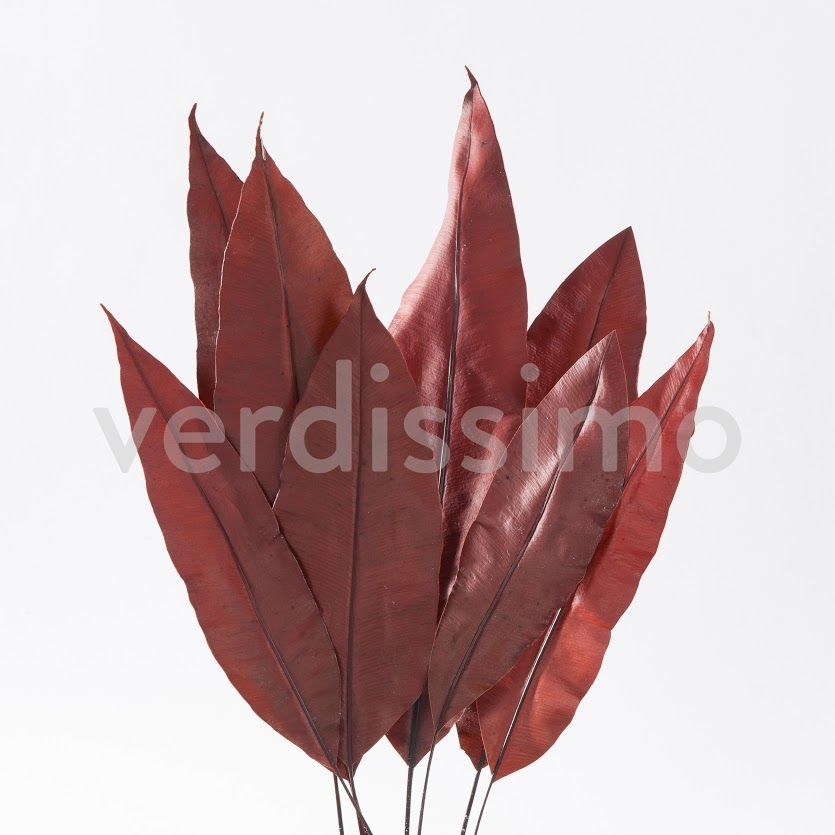 TROPICAL LEAF ROJA.jpg