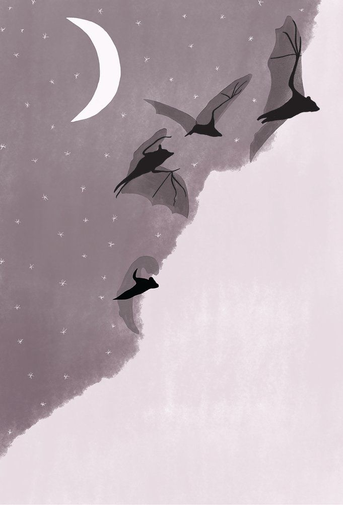 Bats Bring Night In Joanna Newsom Gothic Wallpaper Witchy Wallpaper Cute Wallpaper Backgrounds