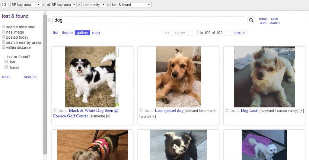 Posting Lost Found Dogs On Craigslist Lost Dogs Of California