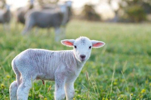 8 maneras de demostrar que amas a los animales - EligeVeg.com