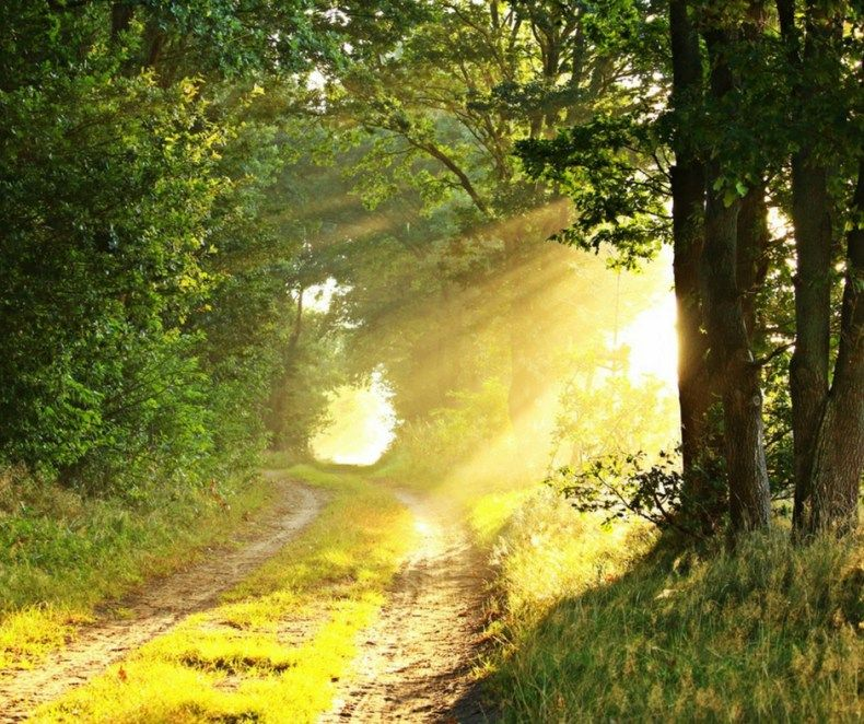 Write for Us | Choosing Wisdom | Forest pictures, Sun photo, Nature view