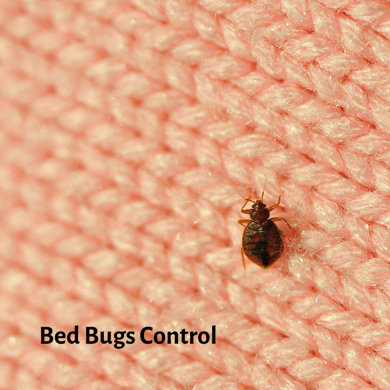 Are you worried about Bed Bugs? Pest control expert