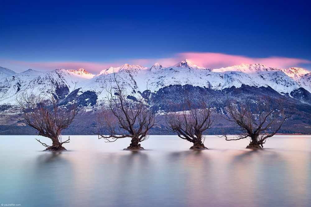 Glenorchy's famous water-bound willow in Lake Wakatipu, Queenstown, New Zealand