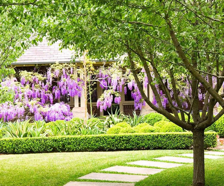Wisteria Plant Guide Types Climate And Pruning Homes To Love Wisteria Plant Plants Plant Guide