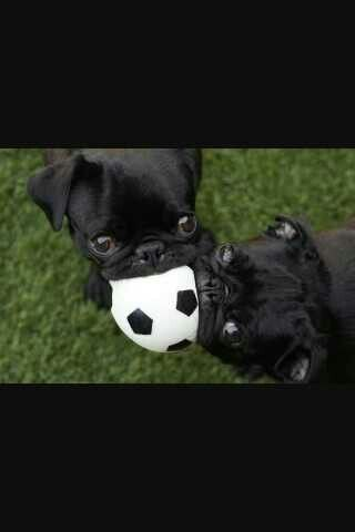 I love pugs and soccer!