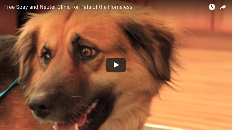 Free Spay and Neuter Clinic for Pets of the Homeless