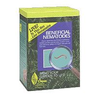 Beneficial Nematodes Are One Of The Best Natural Ways Of Getting Rid Of Many Insect Pests Termite Control Termite Treatment Termites