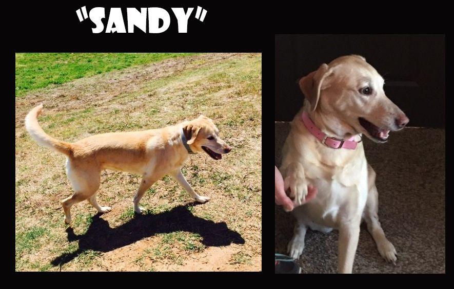 Labrador Retriever dog for Adoption in Madison, AL. ADN-425832 on PuppyFinder.com Gender: Female. Age: Adult