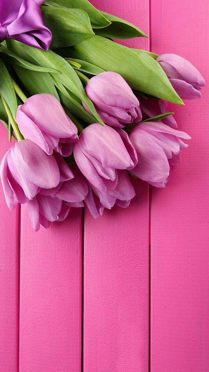 Pretty Spring Phone Background Fondos De Pantalla De Primavera Fondos De Pantalla Tulipanes Flores Tulipanes
