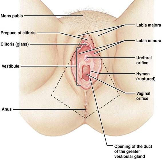Vulva Anotomy Review Health Pinterest Anatomy Knowledge And