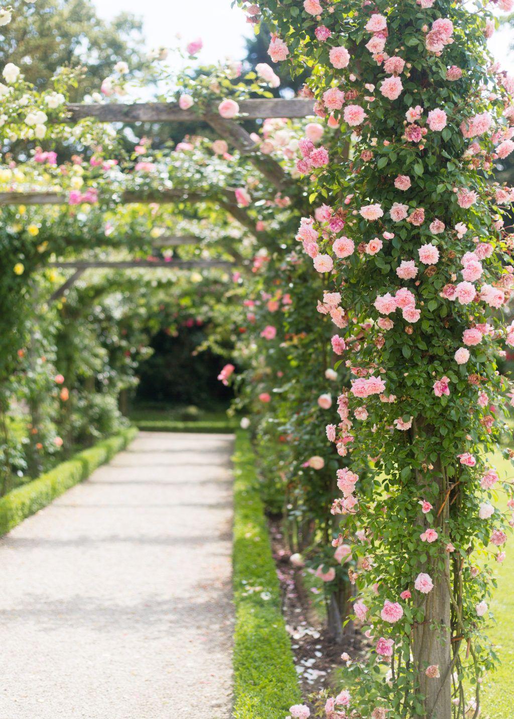 Parc De Bagatelle Rose Garden In Paris Paris Garden Dream