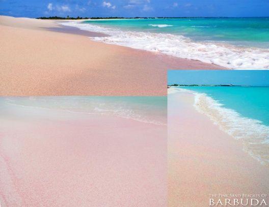 Beach Barbuda Pink Sand