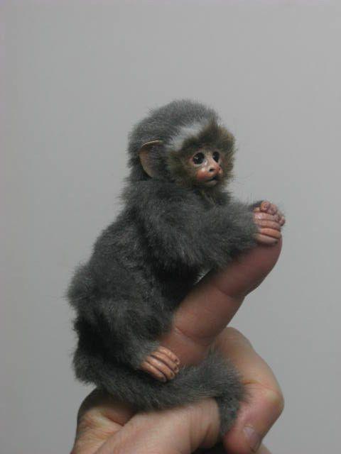 Ooak Baby Monkey Marmoset Handmade Mini Artist Bear Gift By Angelica Cute Monkey Finger Monkey Cute Animals