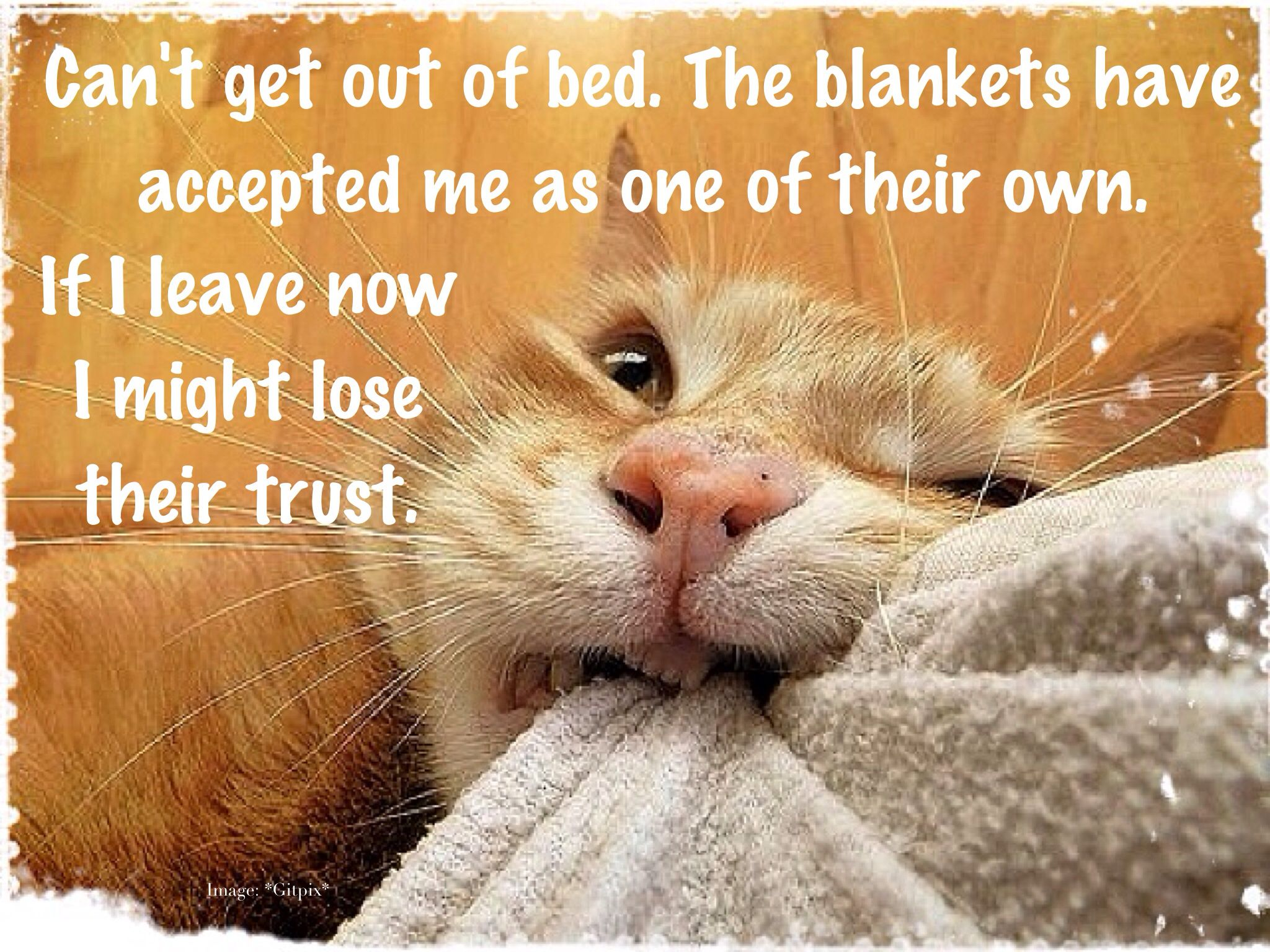 Funny Sick Cat Memes
