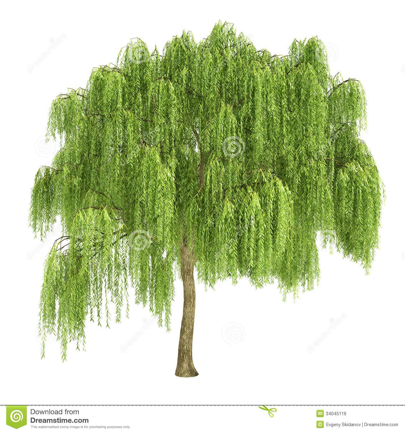 willow tree drawing - Google Search | Milifiori Potential ...