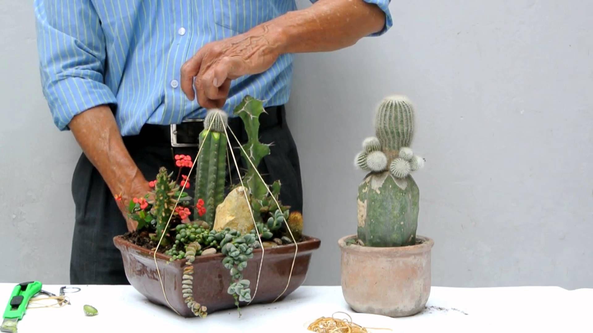 Injerto En Arreglo De Cactus