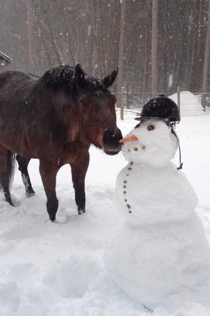 Would you like to save up to 60% on your favorite products and brands? These deals will be gone before that carrot, so check out our post-holiday clearance selection today. (Photo credits to our friend Rebecca Ann and her horse Piper)