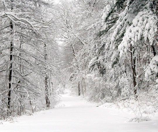 Зимний лес вертикальное фото