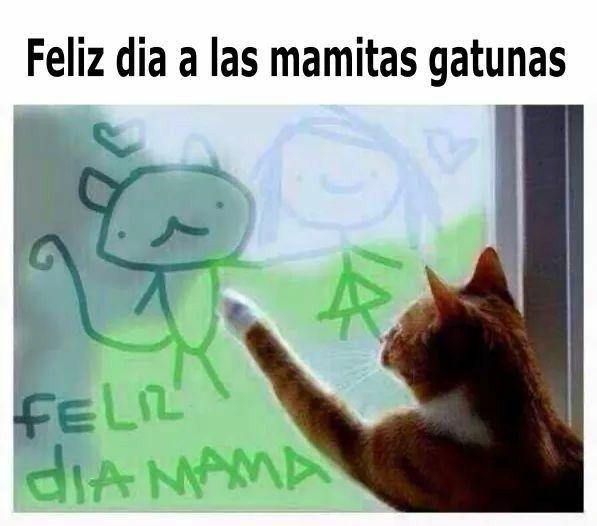 Feliz Dia Mama Gatuna En 2020 Gatitos Divertidos Memes Divertidos Chistes Graciosos De Animales