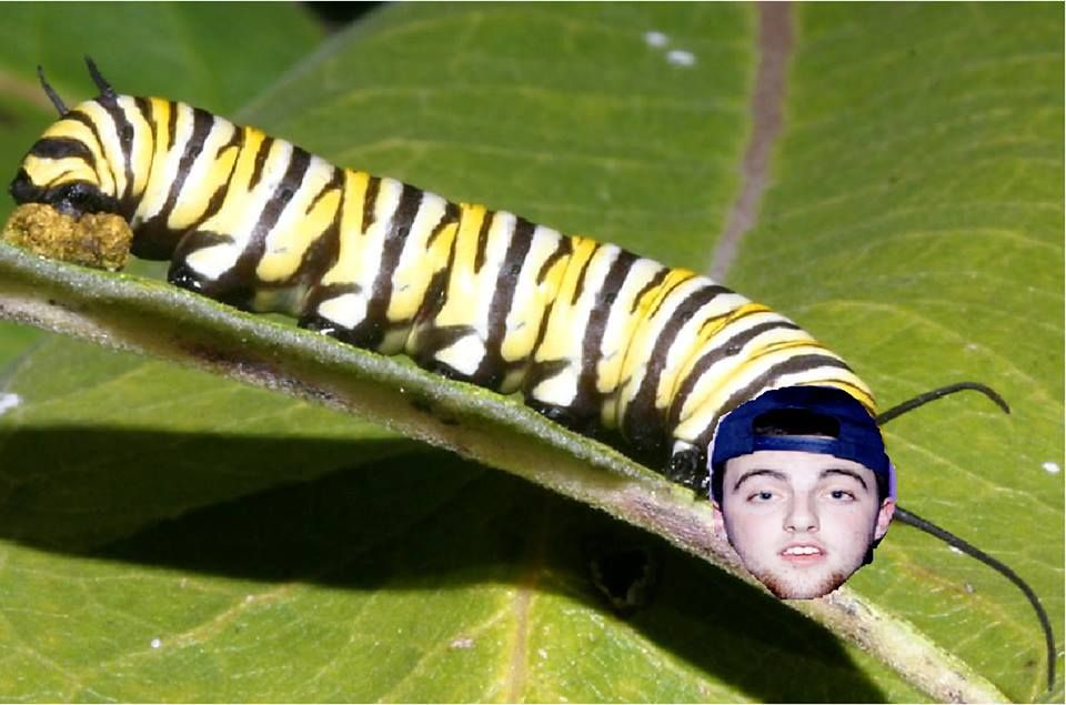my sister made this mac miller the caterpillar | too funny ...