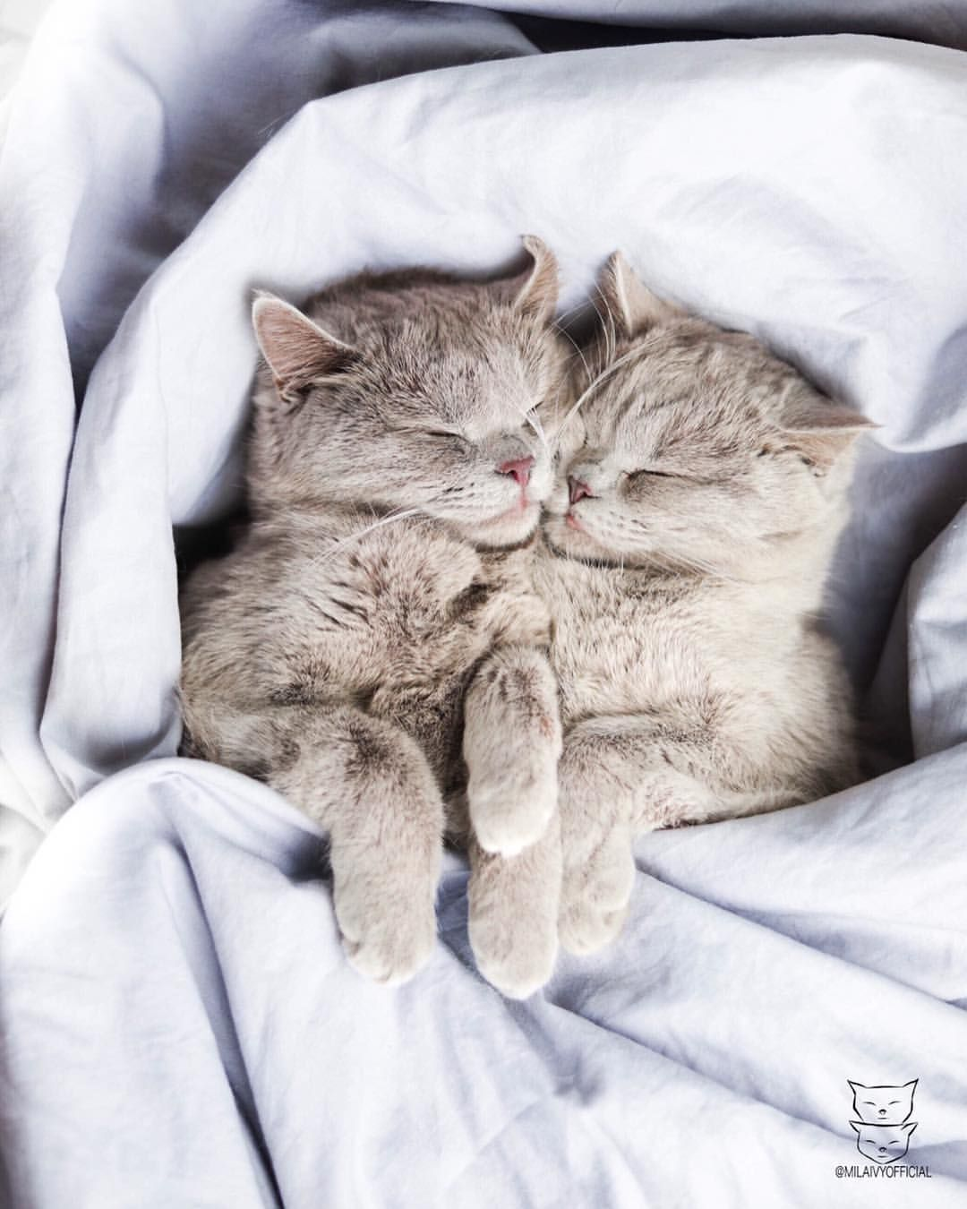 Monday Nahh We Can T See You We Ve Been Sleeping All Day Long Don T Forget To Follow Our Animaux Les Plus Mignons Chat Fou Cute Kittens