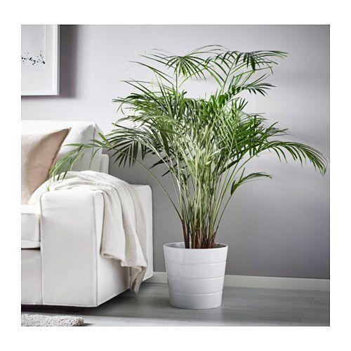 dypsis lutescens plante en pot ar ca en 2019 ikea. Black Bedroom Furniture Sets. Home Design Ideas